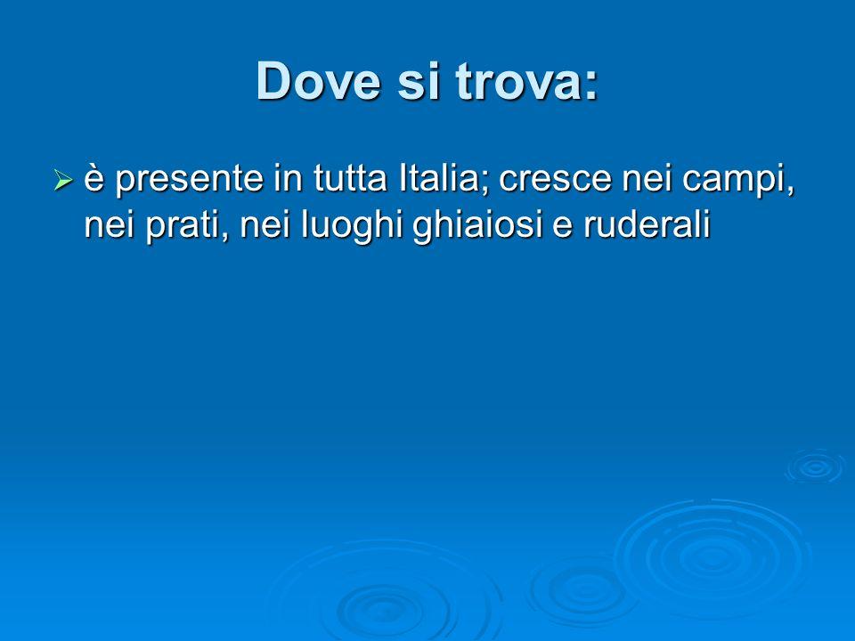 Dove si trova: è presente in tutta Italia; cresce nei campi, nei prati, nei luoghi ghiaiosi e ruderali è presente in tutta Italia; cresce nei campi, nei prati, nei luoghi ghiaiosi e ruderali