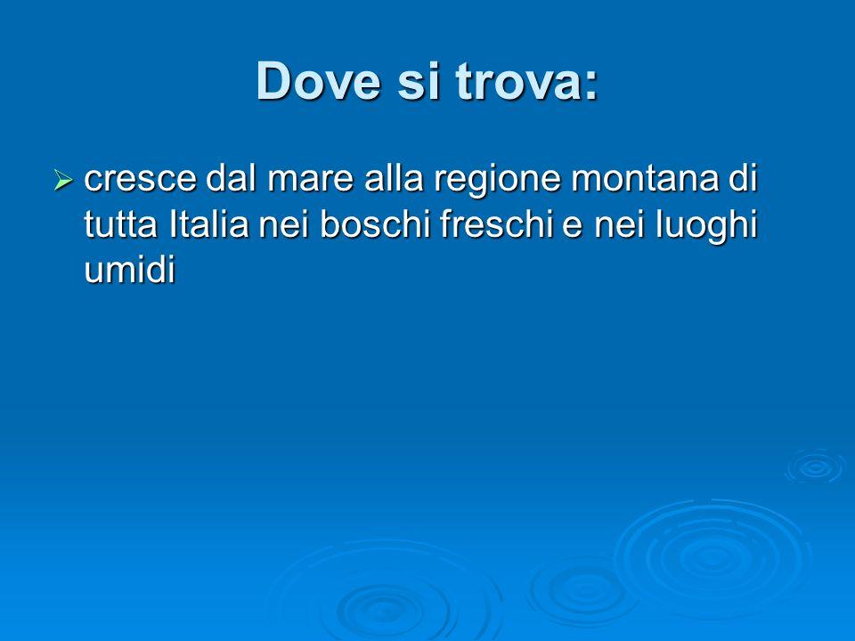 Dove si trova: cresce dal mare alla regione montana di tutta Italia nei boschi freschi e nei luoghi umidi cresce dal mare alla regione montana di tutta Italia nei boschi freschi e nei luoghi umidi