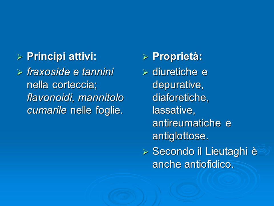 Principi attivi: Principi attivi: fraxoside e tannini nella corteccia; flavonoidi, mannitolo cumarile nelle foglie.