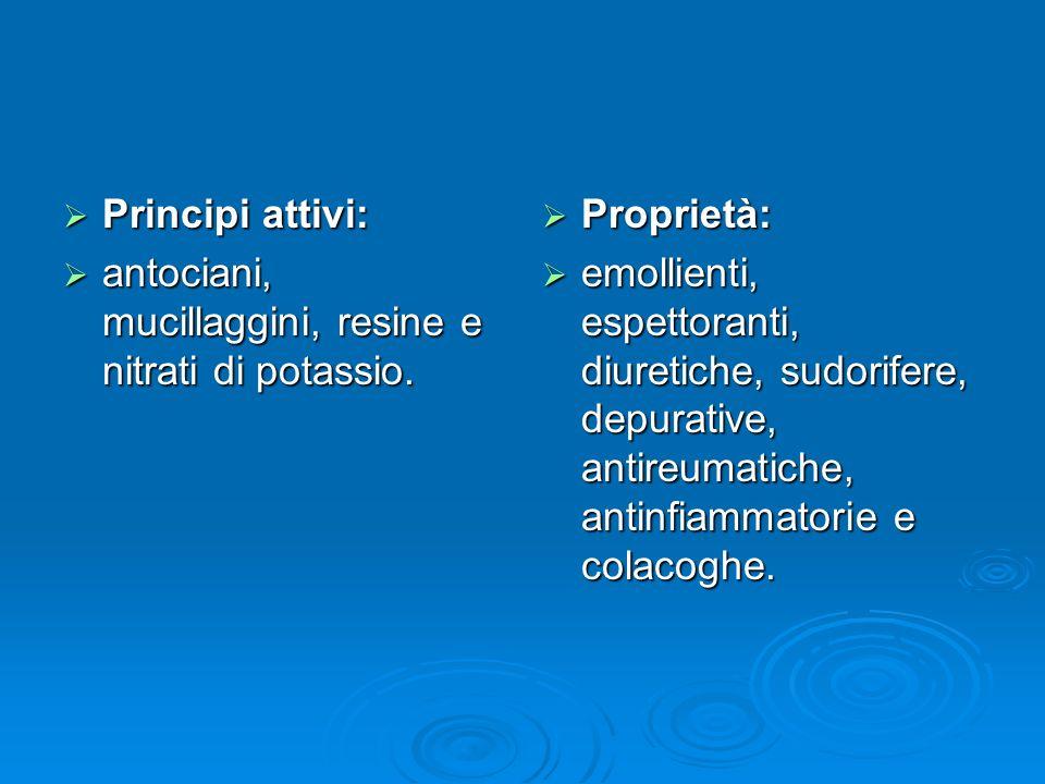 Principi attivi: Principi attivi: antociani, mucillaggini, resine e nitrati di potassio.
