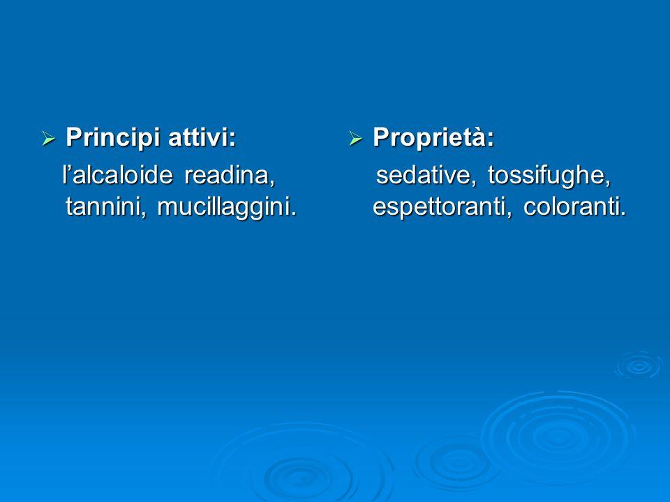 Principi attivi: Principi attivi: lalcaloide readina, tannini, mucillaggini.
