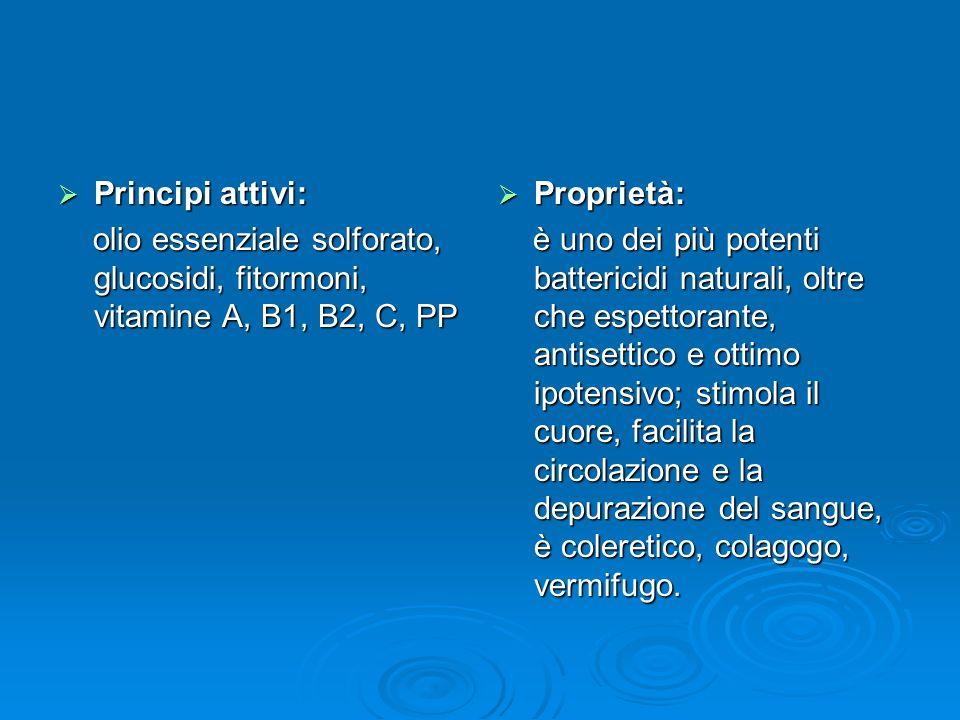 Principi attivi: Principi attivi: olio essenziale solforato, glucosidi, fitormoni, vitamine A, B1, B2, C, PP olio essenziale solforato, glucosidi, fitormoni, vitamine A, B1, B2, C, PP Proprietà: Proprietà: è uno dei più potenti battericidi naturali, oltre che espettorante, antisettico e ottimo ipotensivo; stimola il cuore, facilita la circolazione e la depurazione del sangue, è coleretico, colagogo, vermifugo.