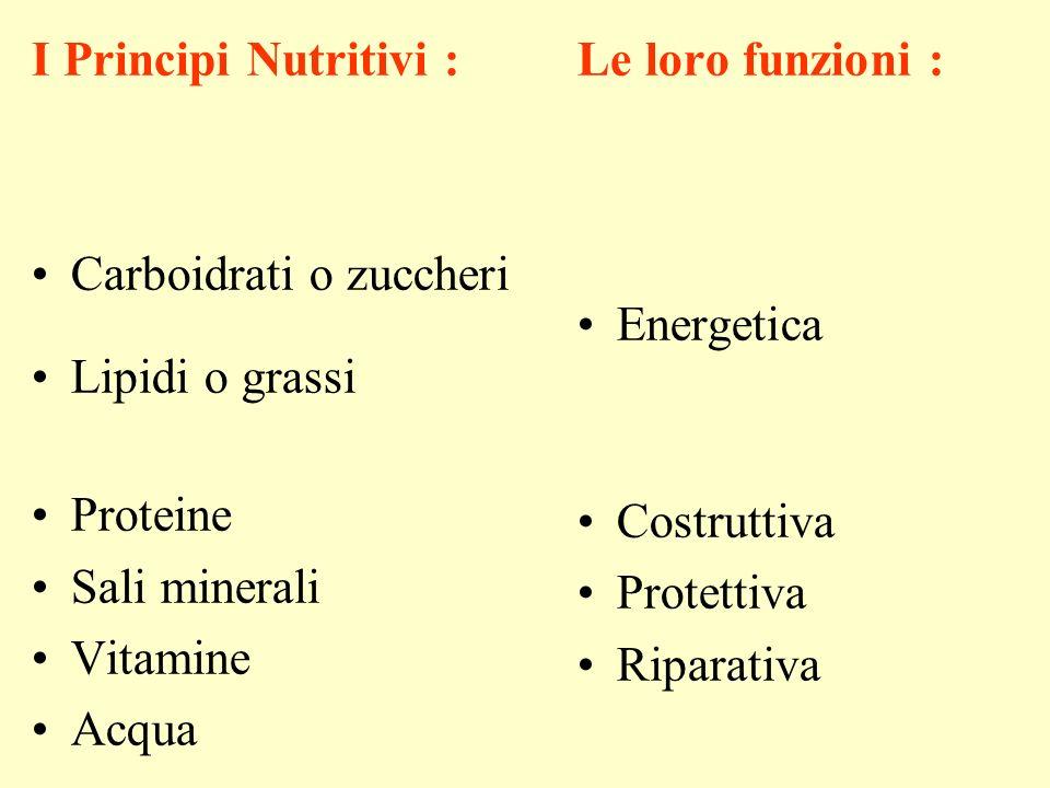 I Principi Nutritivi : Carboidrati o zuccheri Lipidi o grassi Proteine Sali minerali Vitamine Acqua Le loro funzioni : Energetica Costruttiva Protettiva Riparativa