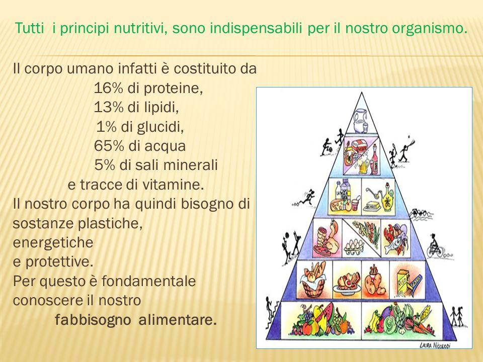 Il corpo umano infatti è costituito da 16% di proteine, 13% di lipidi, 1% di glucidi, 65% di acqua 5% di sali minerali e tracce di vitamine. Il nostro