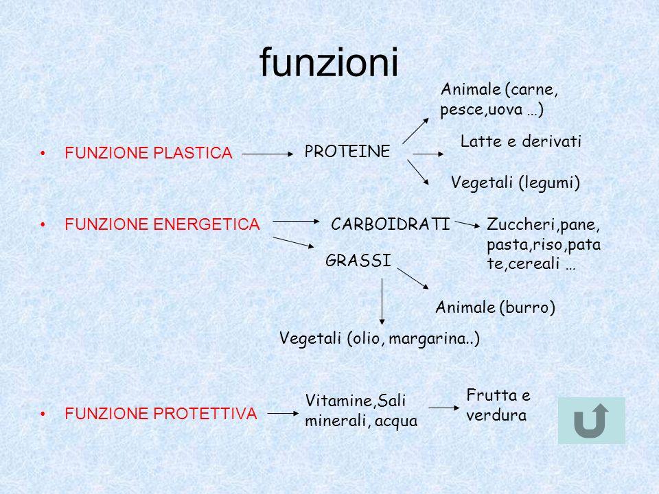 funzioni FUNZIONE PLASTICA FUNZIONE ENERGETICA FUNZIONE PROTETTIVA PROTEINE Animale (carne, pesce,uova …) Latte e derivati Vegetali (legumi) CARBOIDRA