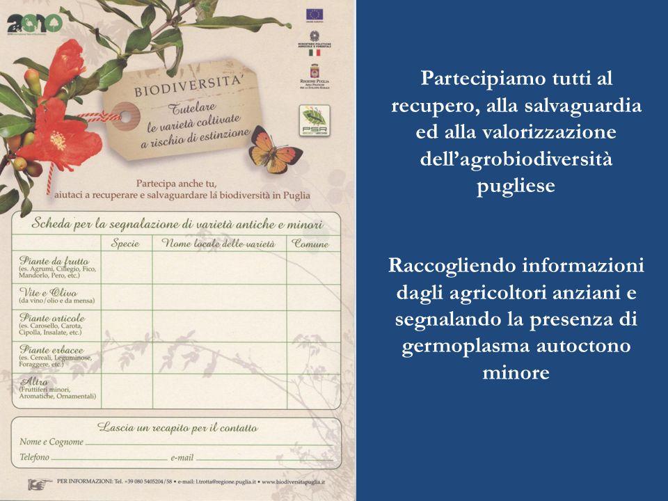 Partecipiamo tutti al recupero, alla salvaguardia ed alla valorizzazione dellagrobiodiversità pugliese Raccogliendo informazioni dagli agricoltori anziani e segnalando la presenza di germoplasma autoctono minore
