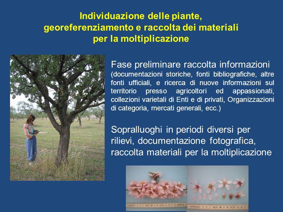 Individuazione delle piante, georeferenziamento e raccolta dei materiali per la moltiplicazione Fase preliminare raccolta informazioni (documentazioni