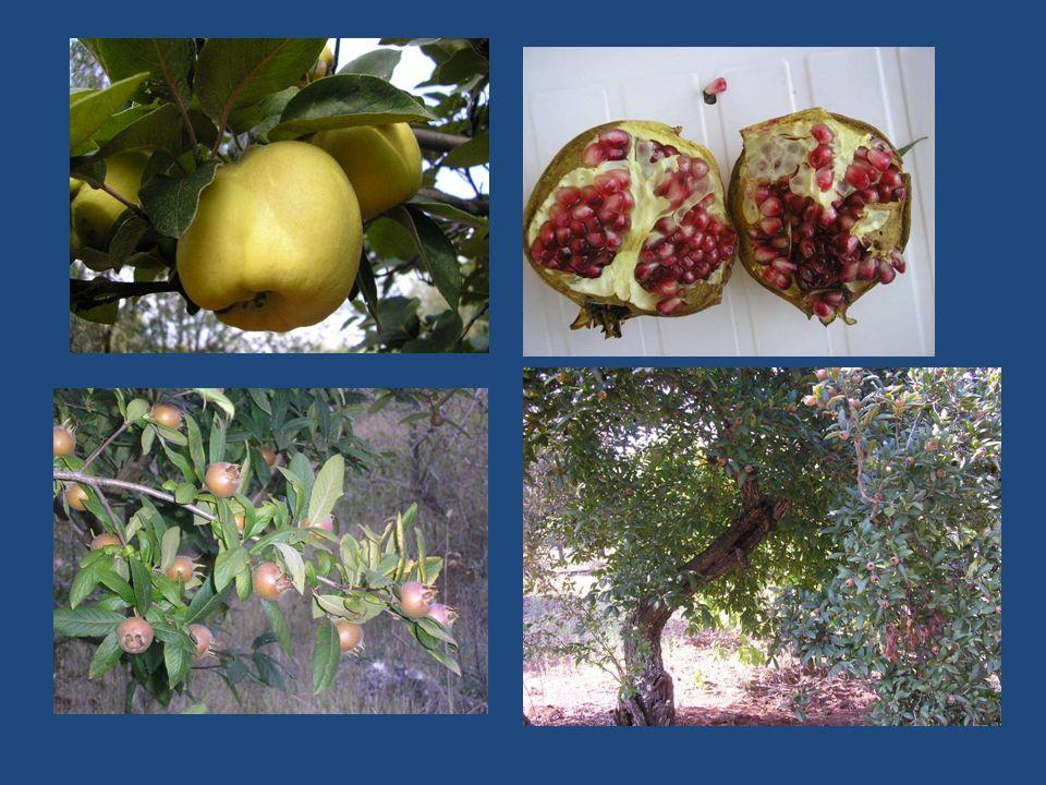 Maggiori dettagli in via di pubblicazione sul sito www.biodiversitapuglia.it