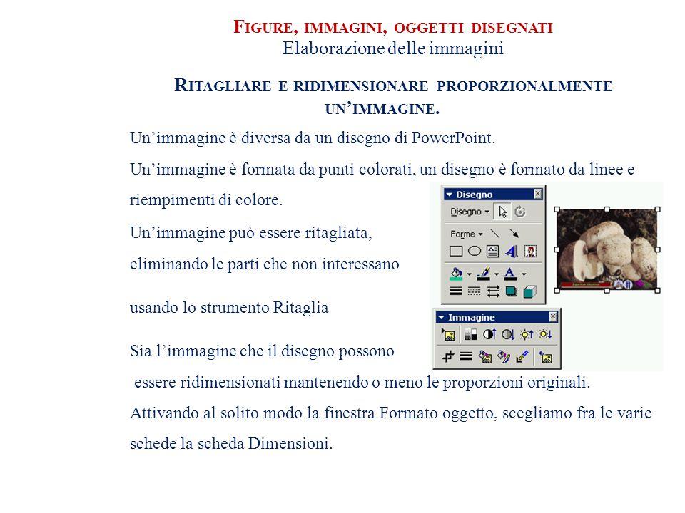 F IGURE, IMMAGINI, OGGETTI DISEGNATI Elaborazione delle immagini R ITAGLIARE E RIDIMENSIONARE PROPORZIONALMENTE UN IMMAGINE.