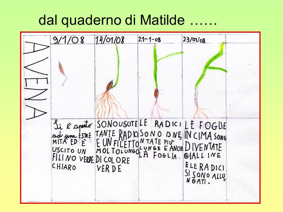 dal quaderno di Matilde ……