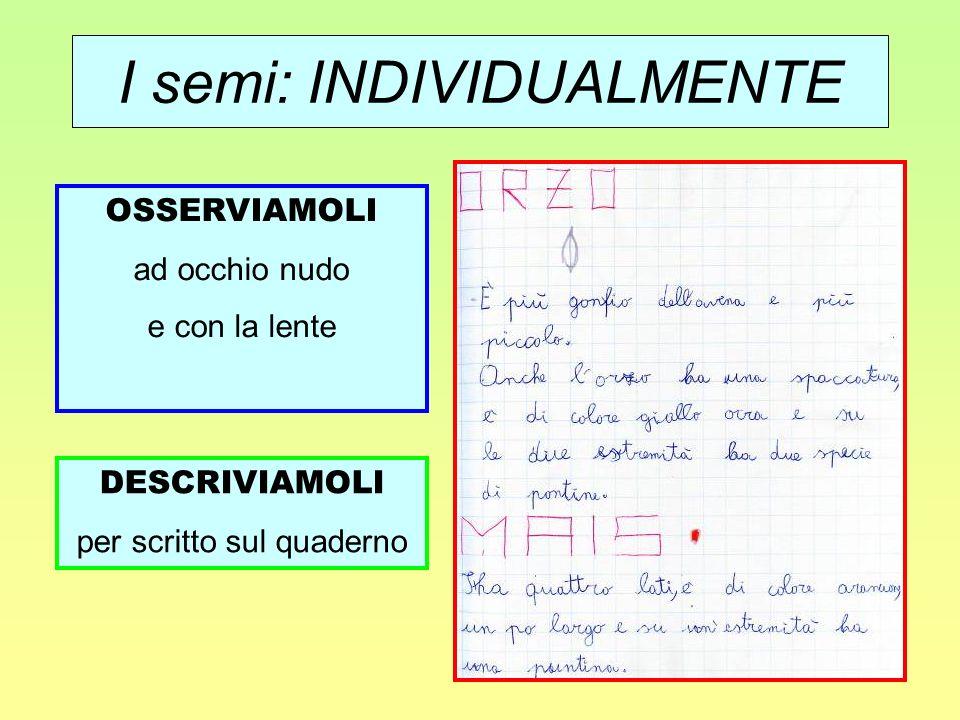 I semi: INDIVIDUALMENTE OSSERVIAMOLI ad occhio nudo e con la lente DESCRIVIAMOLI per scritto sul quaderno