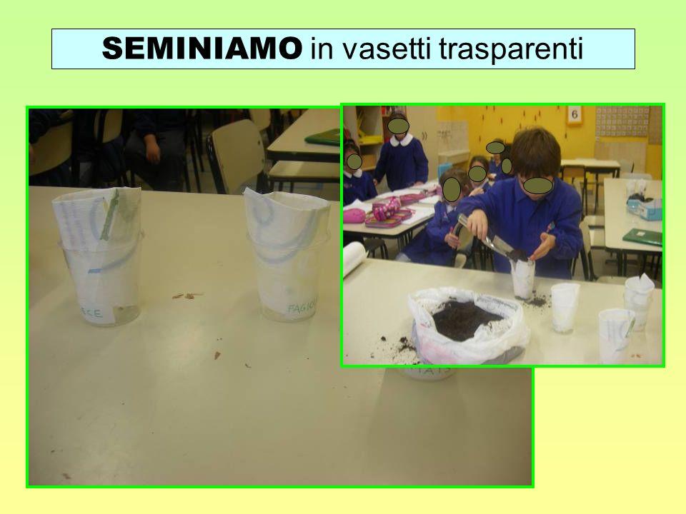 Le due domande finali Ripensa ai semi di baccello, fagiolo, zucca e cece.