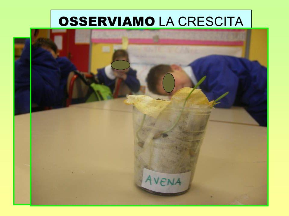 OSSERVIAMO LA CRESCITA