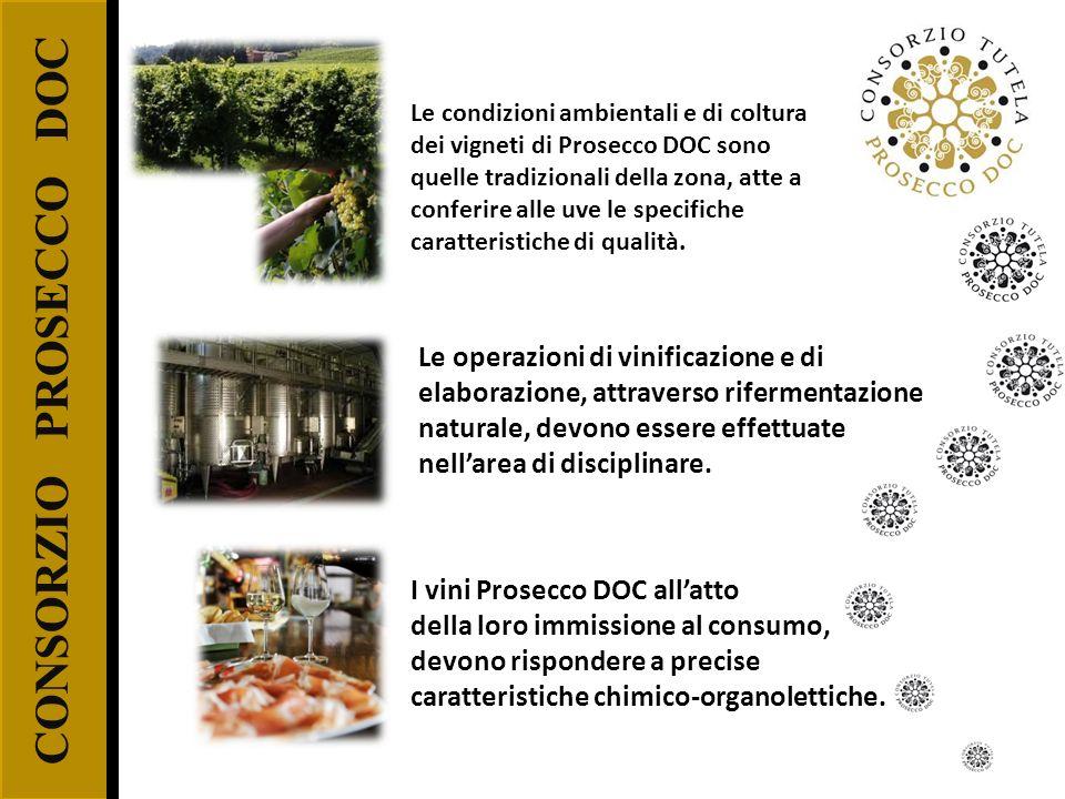 CONSORZIO PROSECCO DOC Le condizioni ambientali e di coltura dei vigneti di Prosecco DOC sono quelle tradizionali della zona, atte a conferire alle uv