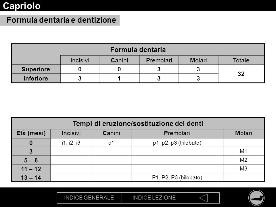 INDICE GENERALEINDICE LEZIONE Capriolo Formula dentaria IncisiviCaniniPremolariMolariTotale Superiore0033 32 Inferiore3133 Tempi di eruzione/sostituzi