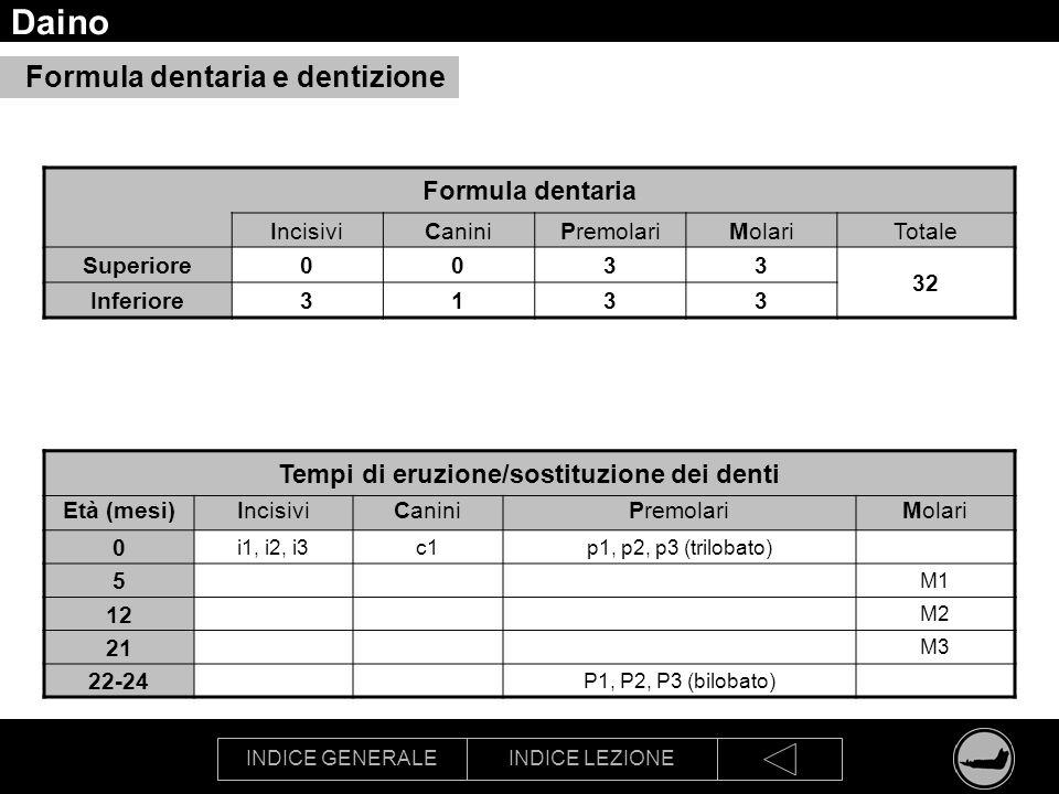 INDICE GENERALEINDICE LEZIONE Daino Formula dentaria IncisiviCaniniPremolariMolariTotale Superiore0033 32 Inferiore3133 Tempi di eruzione/sostituzione