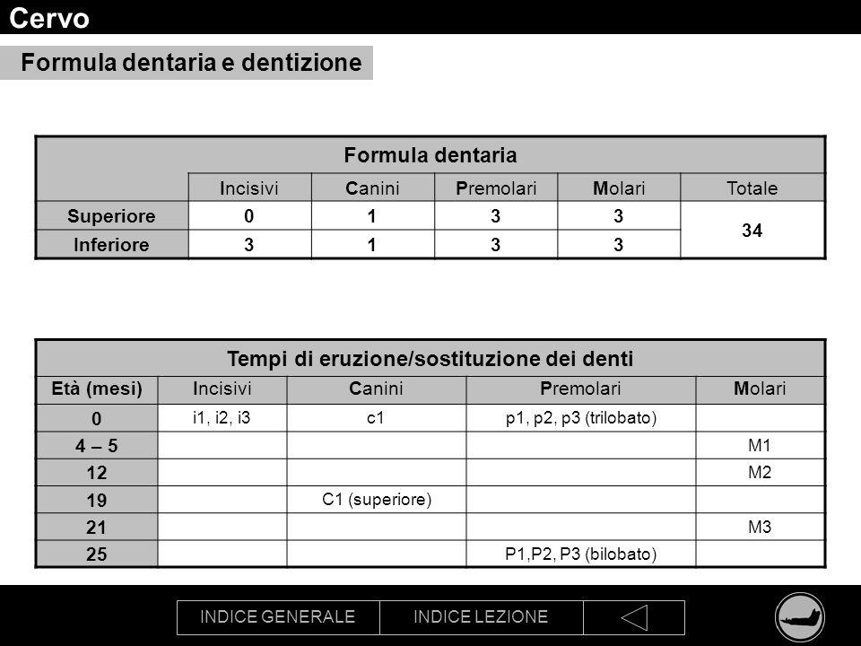 INDICE GENERALEINDICE LEZIONE Cervo Formula dentaria IncisiviCaniniPremolariMolariTotale Superiore0133 34 Inferiore3133 Tempi di eruzione/sostituzione