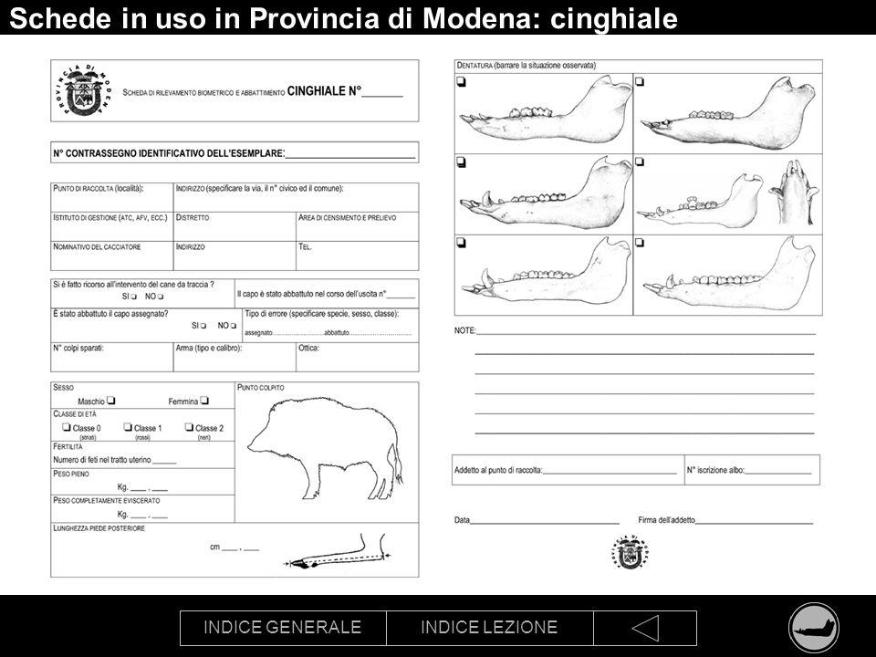 INDICE GENERALEINDICE LEZIONE Schede in uso in Provincia di Modena: cinghiale