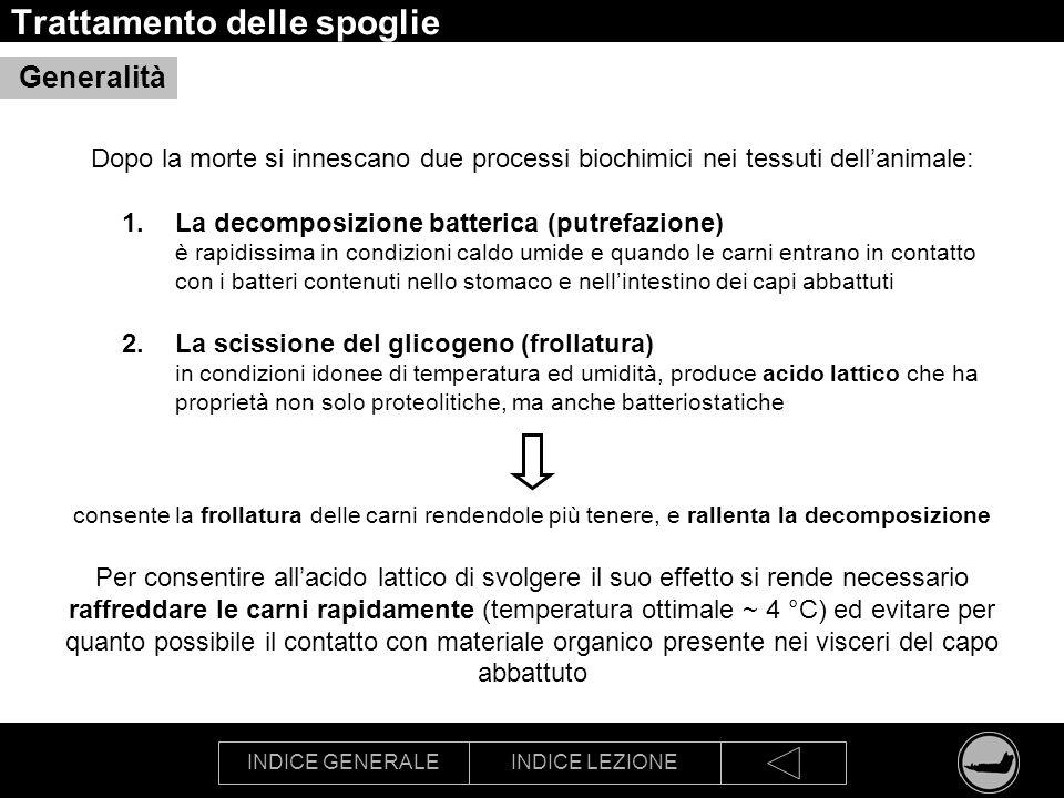 INDICE GENERALEINDICE LEZIONE Trattamento delle spoglie Dopo la morte si innescano due processi biochimici nei tessuti dellanimale: 1.La decomposizion