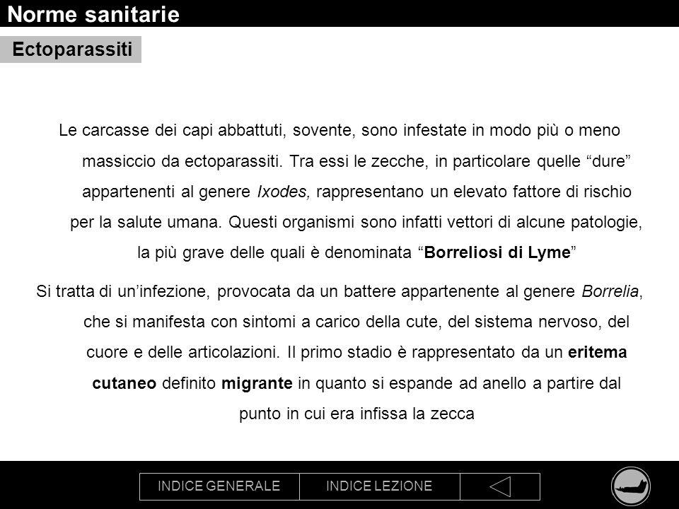 INDICE GENERALEINDICE LEZIONE Norme sanitarie Ectoparassiti Le carcasse dei capi abbattuti, sovente, sono infestate in modo più o meno massiccio da ec