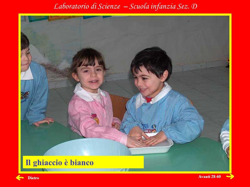 Dietro Laboratorio di Scienze – Scuola infanzia Sez. D Il ghiaccio è bianco Avanti 28-60
