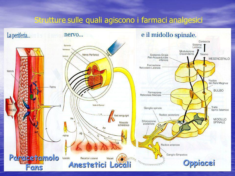 Oppiacei Anestetici Locali Paracetamolo Fans Strutture sulle quali agiscono i farmaci analgesici