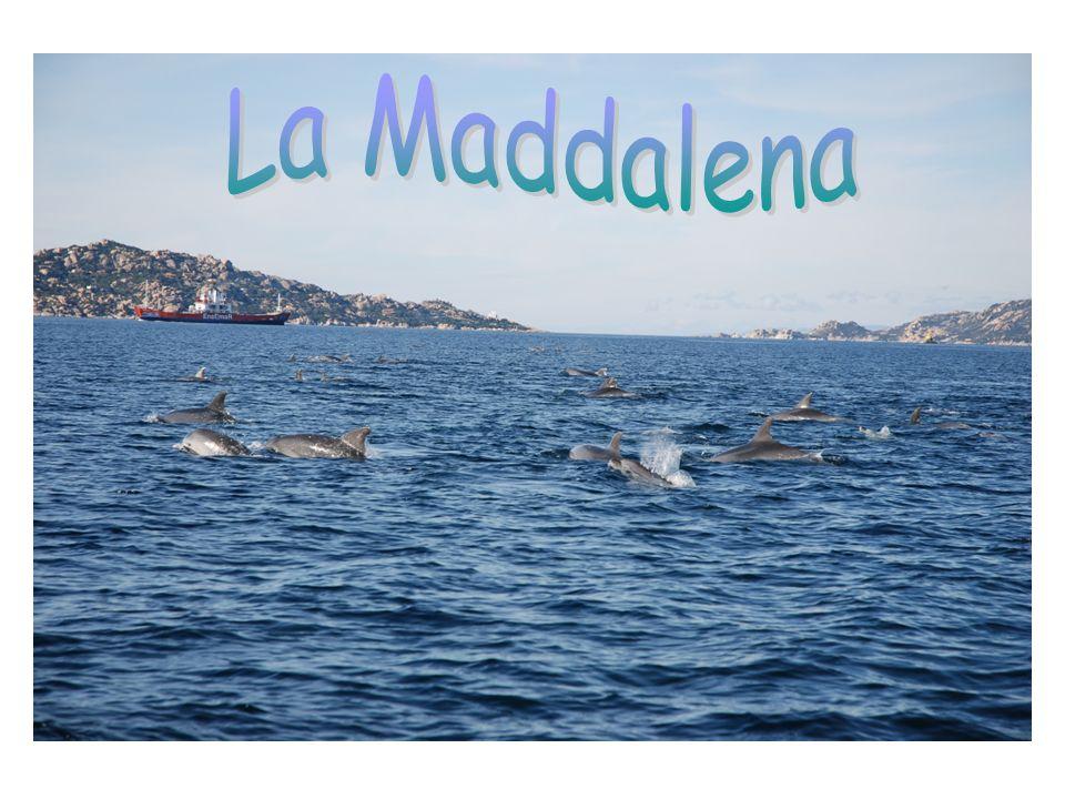 Interazione uomo delfino STESSE PREDE STESSO AMBIENTE