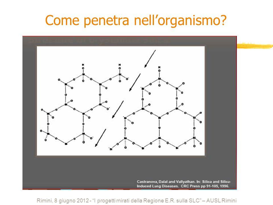 Rimini, 8 giugno 2012 - I progetti mirati della Regione E.R. sulla SLC – AUSL Rimini Come penetra nellorganismo?