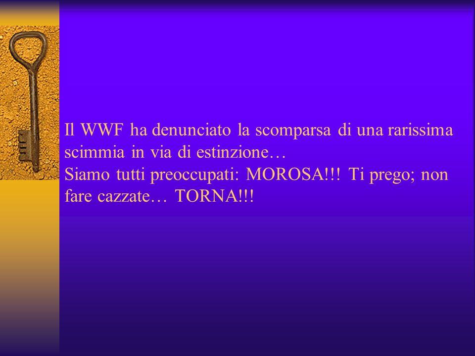 Il WWF ha denunciato la scomparsa di una rarissima scimmia in via di estinzione… Siamo tutti preoccupati: MOROSA!!.