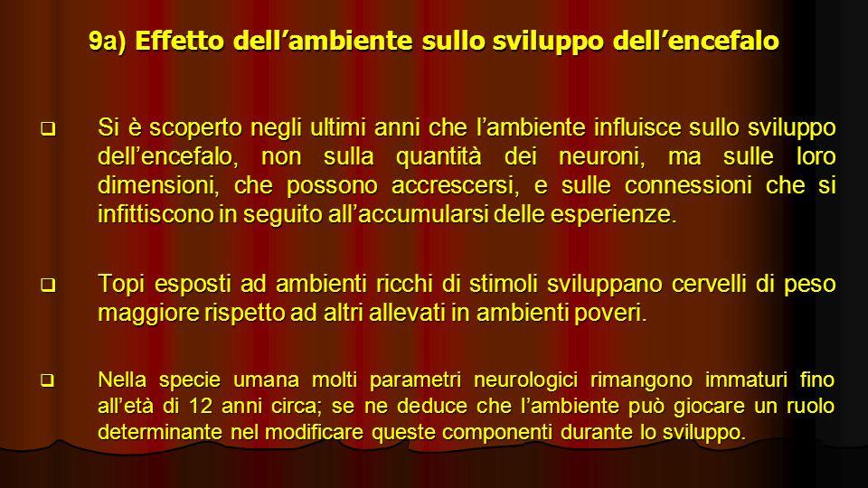 9a) Effetto dellambiente sullo sviluppo dellencefalo Si è scoperto negli ultimi anni che lambiente influisce sullo sviluppo dellencefalo, non sulla qu