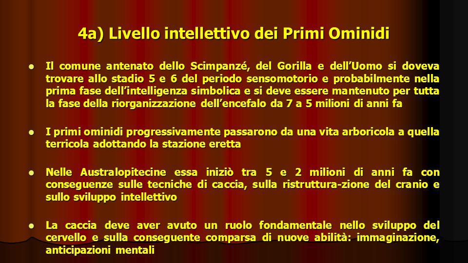 4a) Livello intellettivo dei Primi Ominidi Il comune antenato dello Scimpanzé, del Gorilla e dellUomo si doveva trovare allo stadio 5 e 6 del periodo