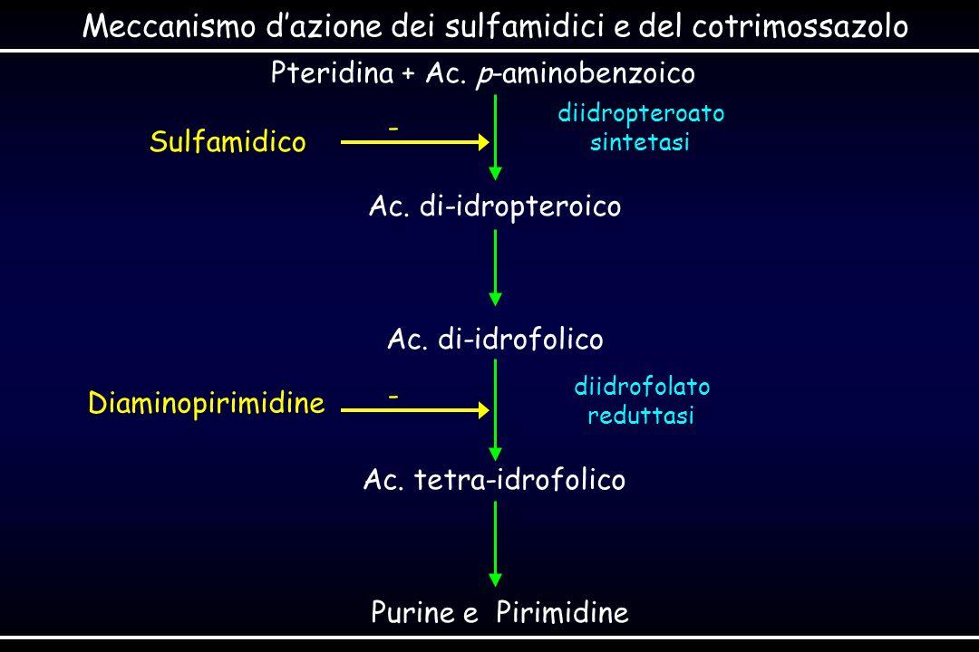 Pteridina + Ac. p-aminobenzoico Ac. di-idropteroico Ac. di-idrofolico Ac. tetra-idrofolico Purine e Pirimidine diidropteroato sintetasi diidrofolato r