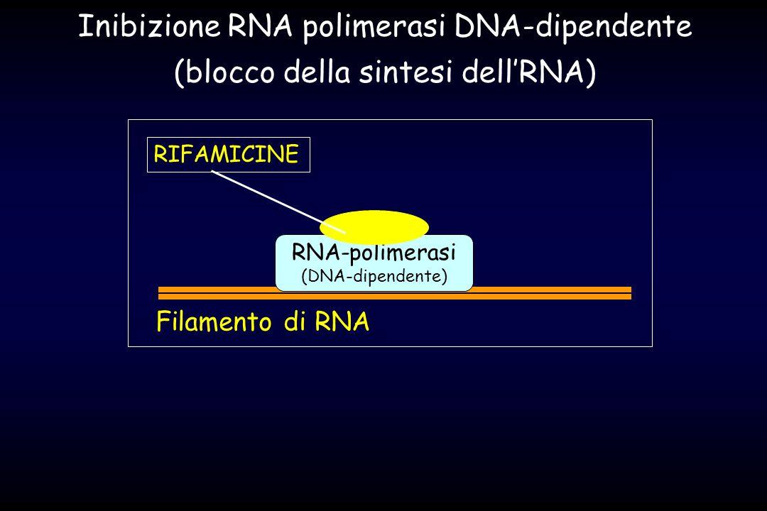 RNA-polimerasi (DNA-dipendente) Filamento di RNA RIFAMICINE Inibizione RNA polimerasi DNA-dipendente (blocco della sintesi dellRNA)