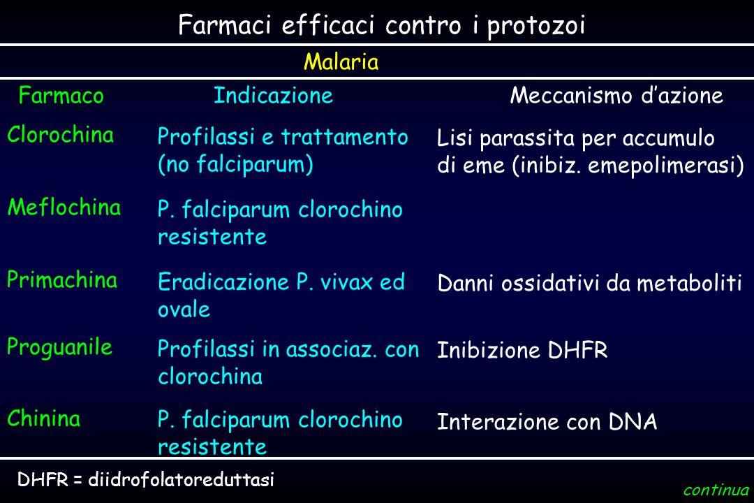 Farmaci efficaci contro i protozoi IndicazioneMeccanismo dazione Clorochina Profilassi e trattamento (no falciparum) Lisi parassita per accumulo di em