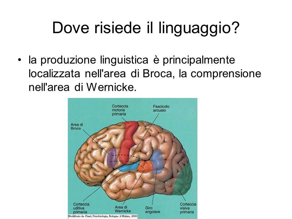 Dove risiede il linguaggio? la produzione linguistica è principalmente localizzata nell'area di Broca, la comprensione nell'area di Wernicke.