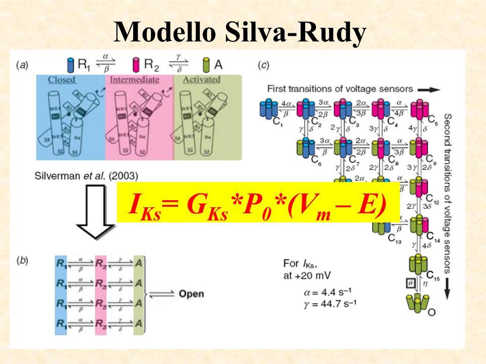 Modello Silva-Rudy I Ks = G Ks *P 0 *(V m – E)