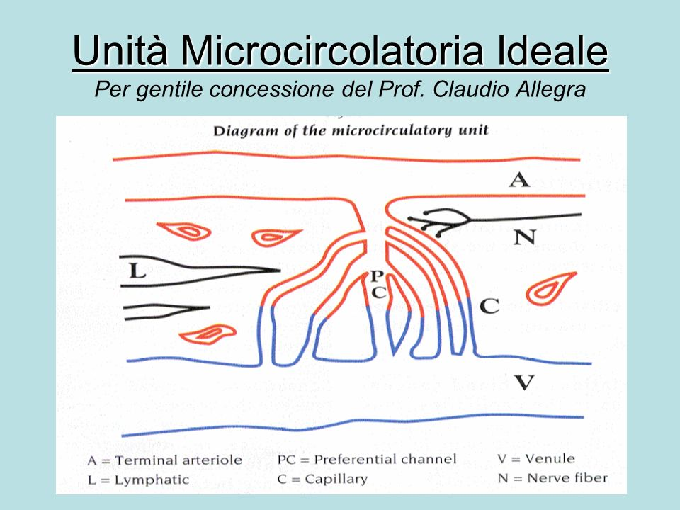 Unità Microcircolatoria Ideale Unità Microcircolatoria Ideale Per gentile concessione del Prof.