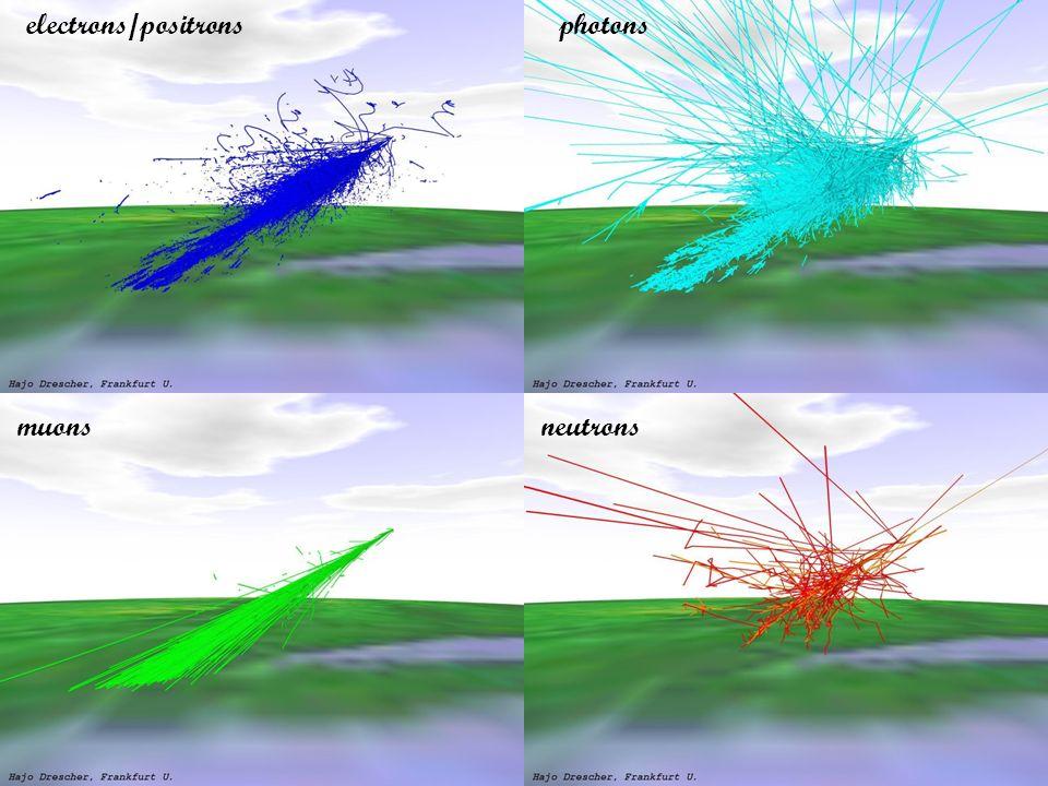 photonselectrons/positrons muonsneutrons