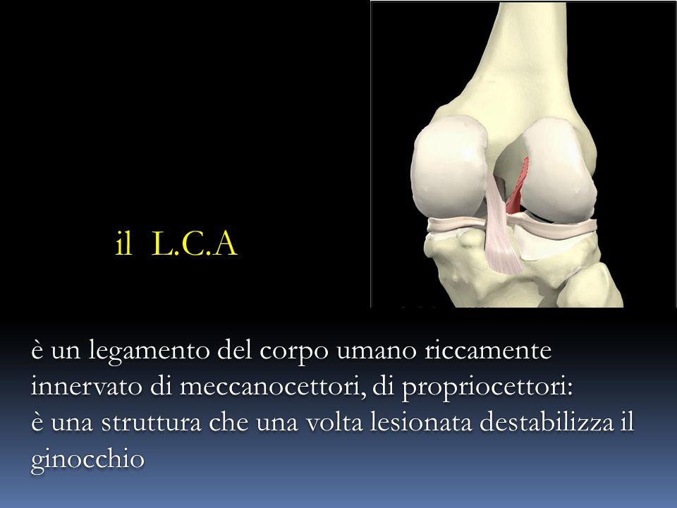 il L.C.A è un legamento del corpo umano riccamente innervato di meccanocettori, di propriocettori: è una struttura che una volta lesionata destabilizz