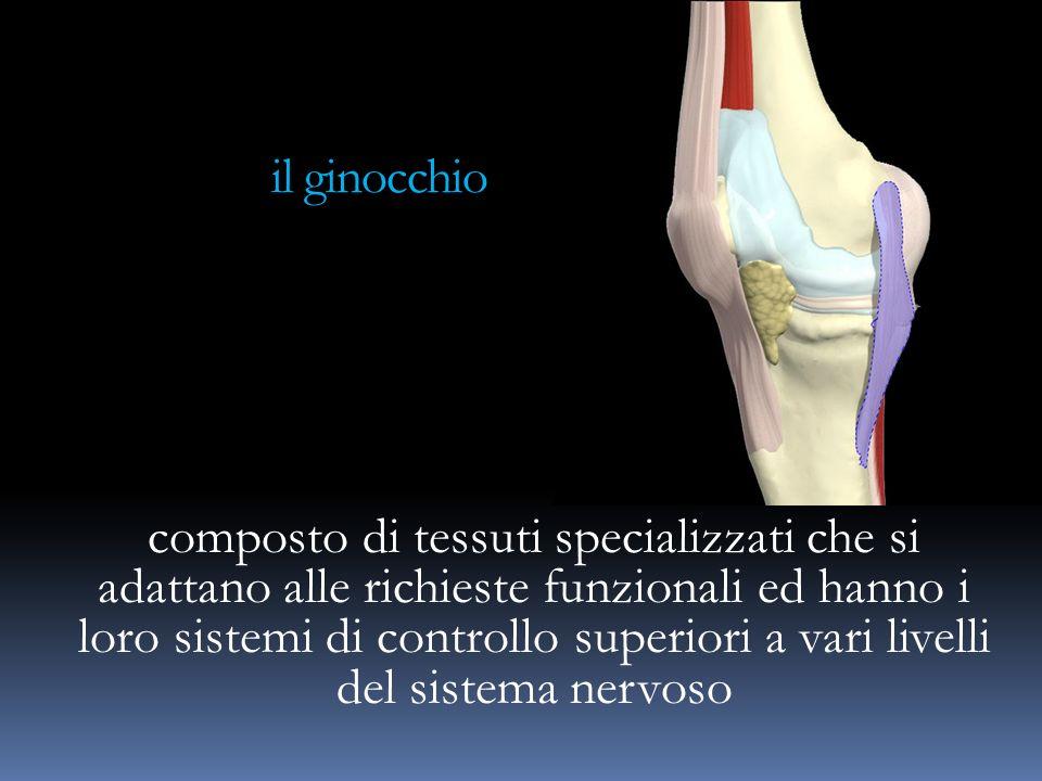 il ginocchio composto di tessuti specializzati che si adattano alle richieste funzionali ed hanno i loro sistemi di controllo superiori a vari livelli