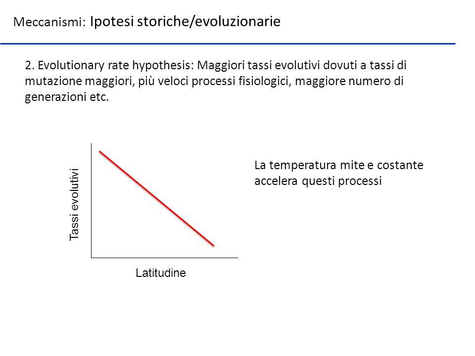 Meccanismi: Ipotesi storiche/evoluzionarie 2. Evolutionary rate hypothesis: Maggiori tassi evolutivi dovuti a tassi di mutazione maggiori, più veloci