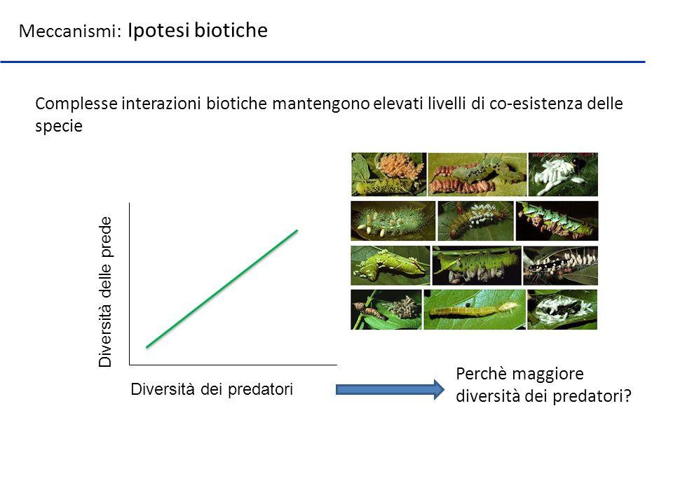 Meccanismi: Ipotesi biotiche Complesse interazioni biotiche mantengono elevati livelli di co-esistenza delle specie Diversità dei predatori Diversità