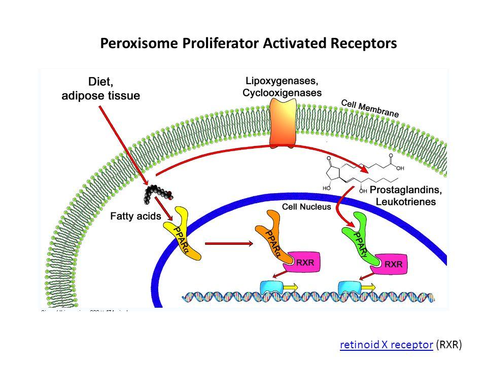 Peroxisome Proliferator Activated Receptors retinoid X receptorretinoid X receptor (RXR)