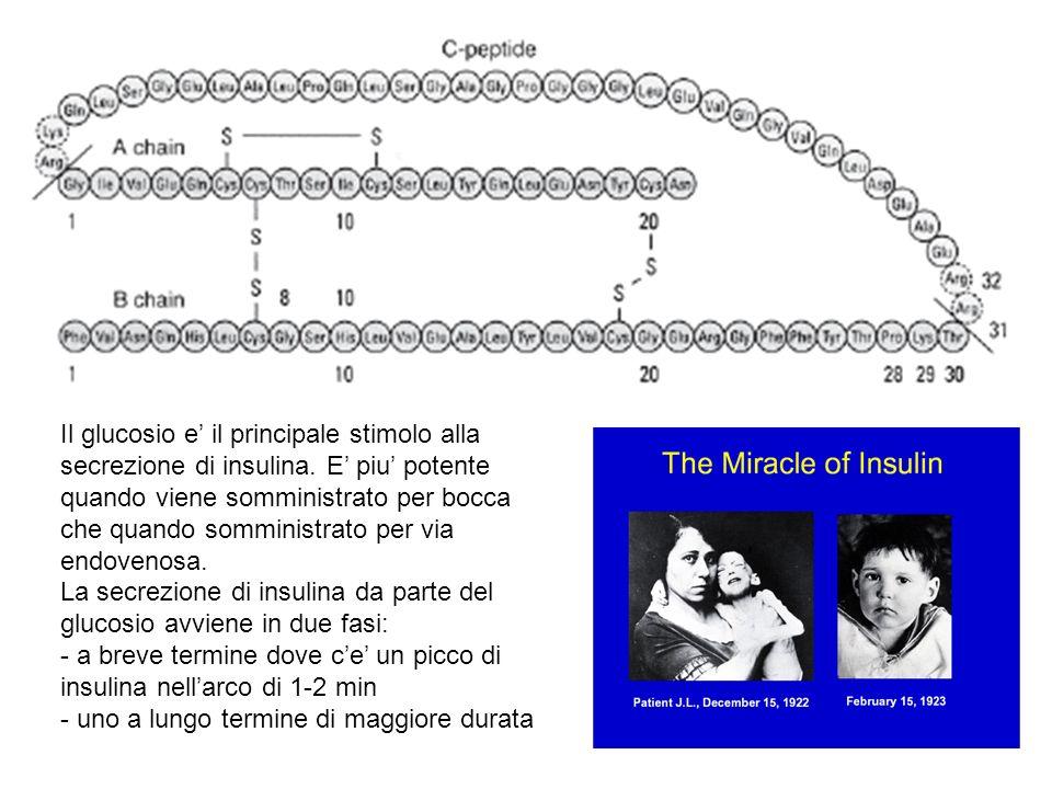 Il glucosio e il principale stimolo alla secrezione di insulina. E piu potente quando viene somministrato per bocca che quando somministrato per via e