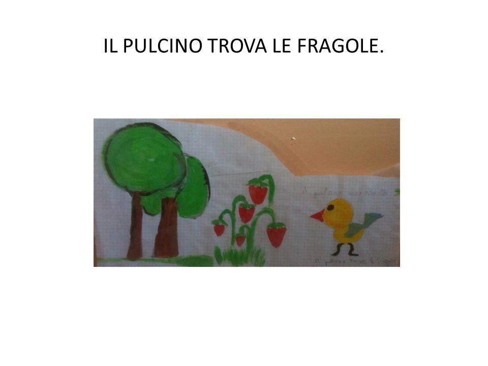 IL PULCINO TROVA LE FRAGOLE.