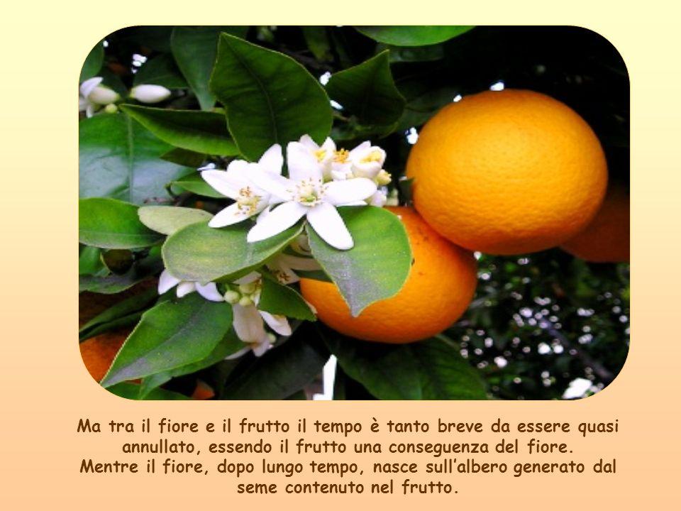 Eppure se il fiore non ci fosse stato non sarebbe maturato il frutto.
