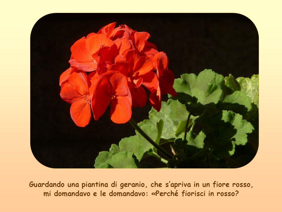 Così Maria è il fiore fiorito sullalbero dellumanità nato da Dio che creò il primo seme in Adamo, è Figlia di Dio suo Figlio.