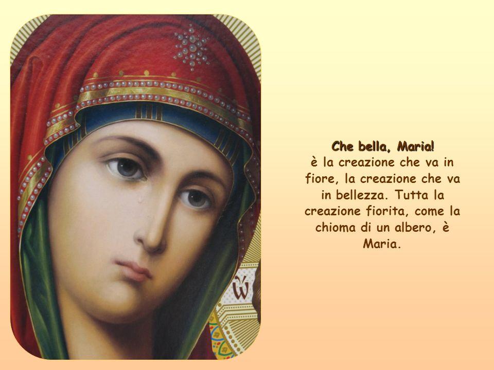 E, come il fiore rosso è grato alla piantina verde con le radici e il concime che la fece fiorire, così Maria è, perché vi fummo noi peccatori, che costringemmo Dio a pensare a Maria.