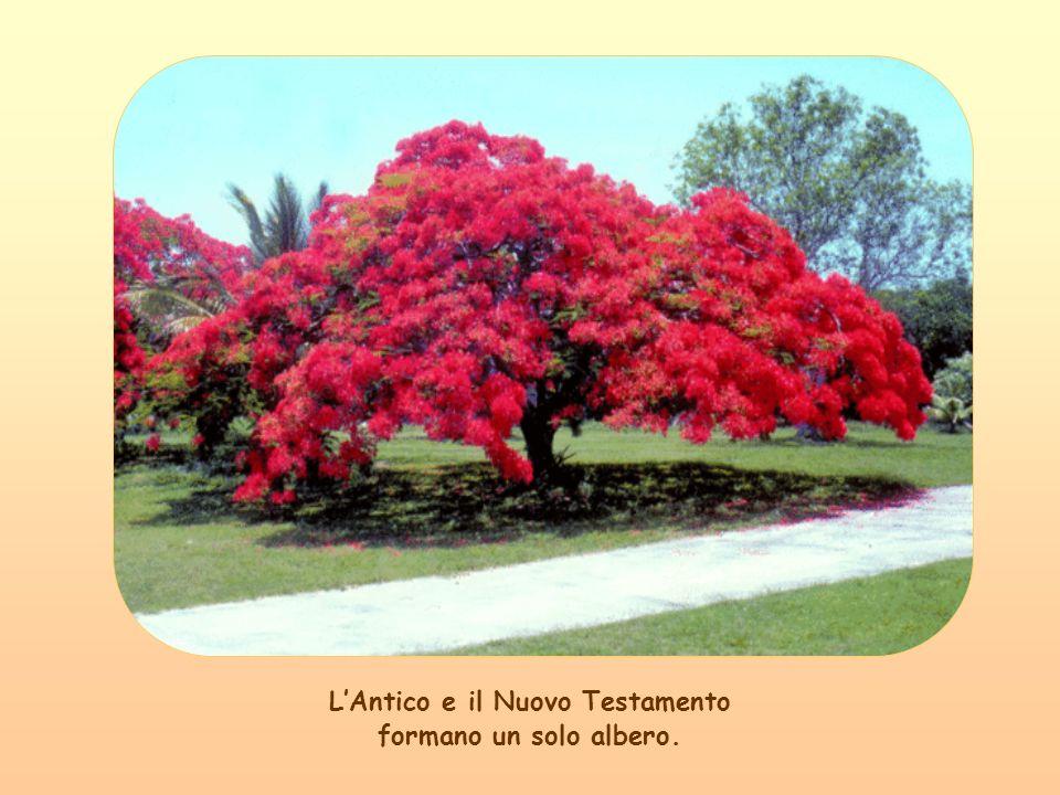 Poi dal fiore, che ne scaturisce, nasce il frutto e perciò la vita continua, è come la Vita eterna di Dio improntata alla natura.