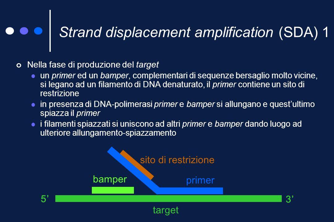 RealArt PCR del DNA (frammento specie-specifico, di 163pb, del gene codificante per il rRNA 16S) Estrazione, manuale (usando kit del commercio) Amplificazione e rilevamento dellamplificato automatizzata (ABI Prism sequence detection system) Rilevamento fluorimetrico dellamplificato in tempo reale.